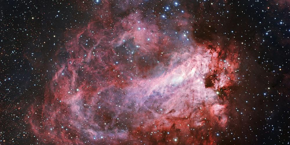 rose-cosmique