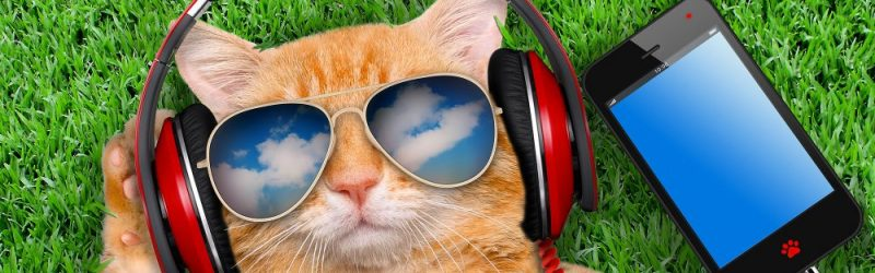 chat-casque-